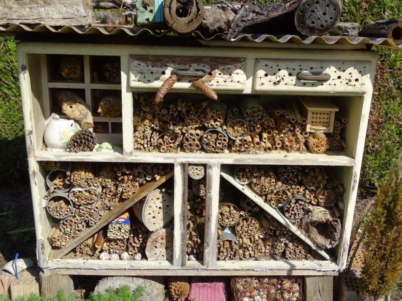 Élevage d'insectes pollinisateurs Dsc07311