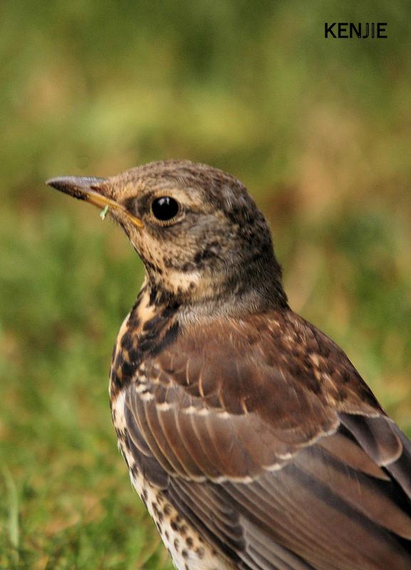 mon abc des oiseaux - Page 3 14110