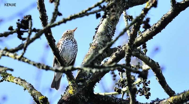 mon abc des oiseaux - Page 3 161_gr11