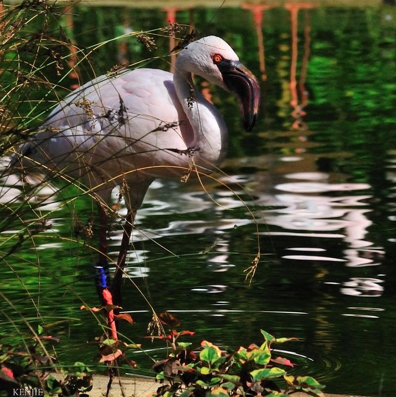 mon abc des oiseaux - Page 3 222_fa10