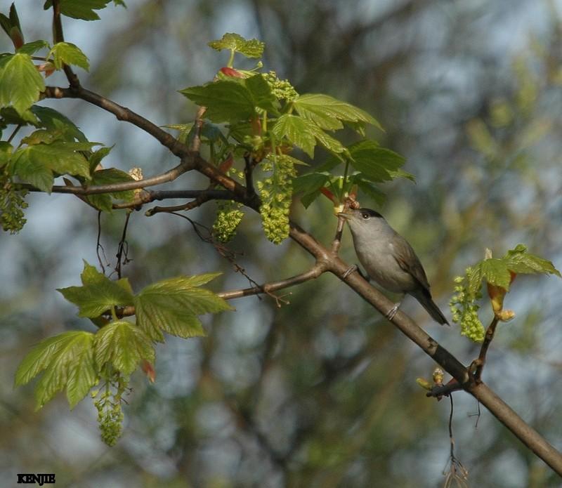 mon abc des oiseaux - Page 3 95_fau10