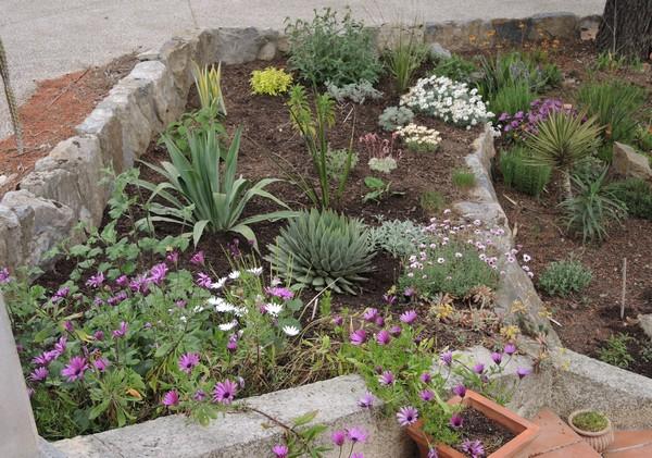 rocaille au printemps chez Jeyssi Dscn4418