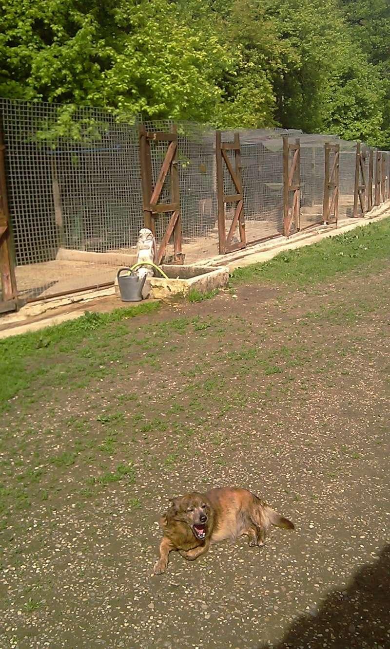 TIGRE - petit croisé 11 ans - Refuge Clochards Poilus à Tabanac (33) Imag0326