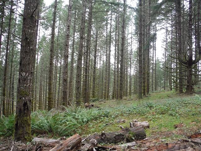 The Black Forest Black_13