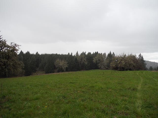 The Black Forest Black_14