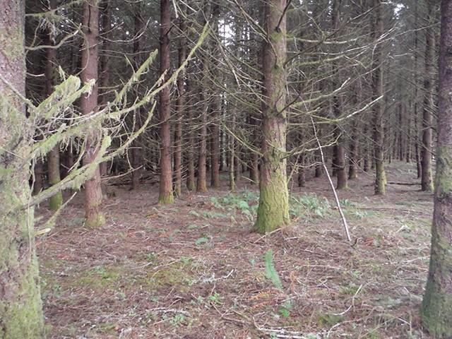 The Black Forest Black_15