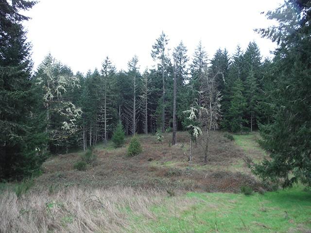 The Black Forest Black_19