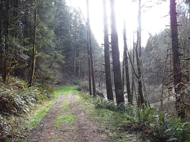 The Black Forest Black_22