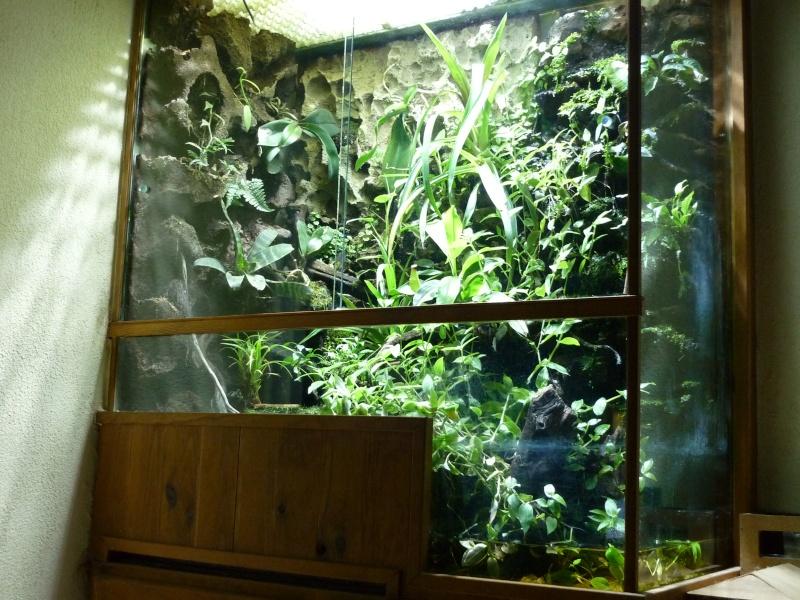 mon aquaterrarium Terrar10