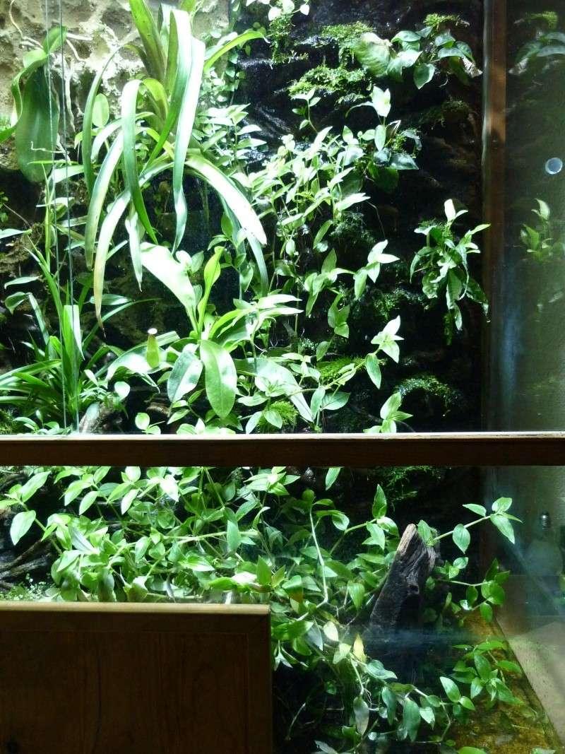 mon aquaterrarium Terrar12