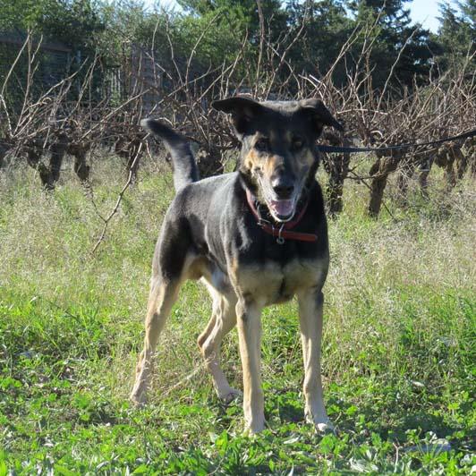 OMER - x ba 10 ans  (3 ans de refuge)- Sans Collier Provence à Gareoult (83) Entier10