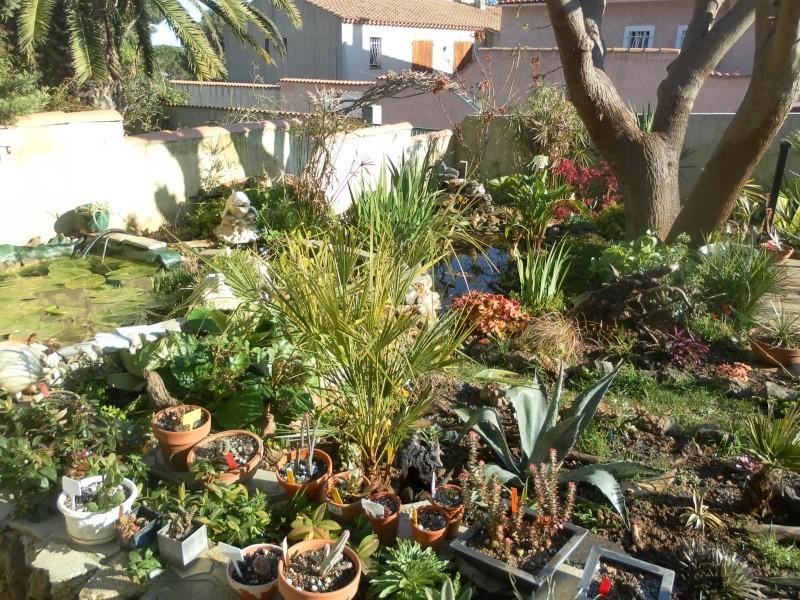 le jardin de syljou - Page 2 Sam_3017