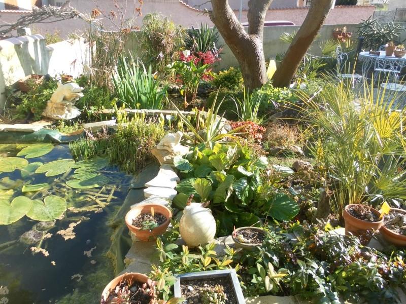 le jardin de syljou - Page 2 Sam_3018