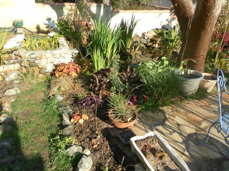 le jardin de syljou - Page 2 Sam_3021