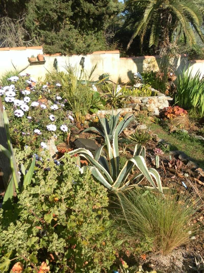 le jardin de syljou - Page 2 Sam_3023