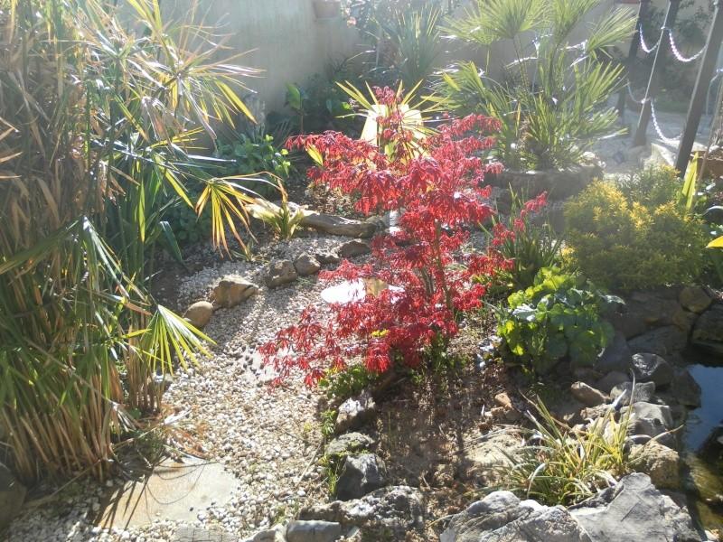 le jardin de syljou - Page 2 Sam_3025
