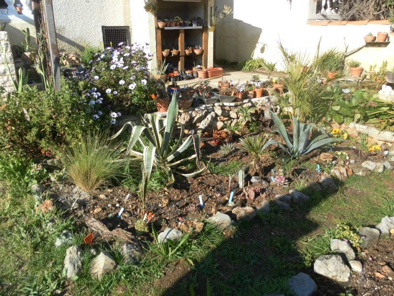 le jardin de syljou - Page 2 Sam_3028