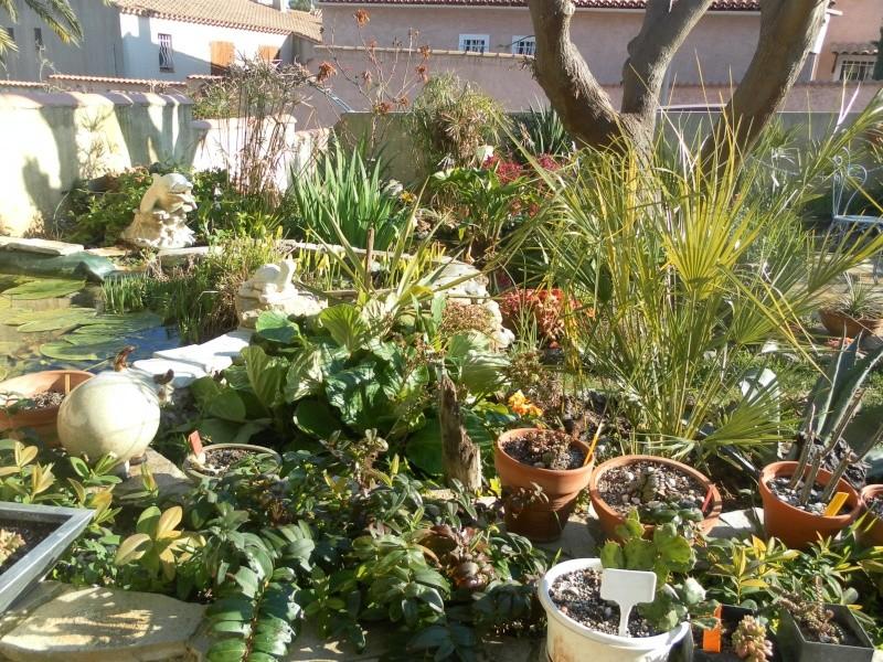 le jardin de syljou - Page 2 Sam_3031