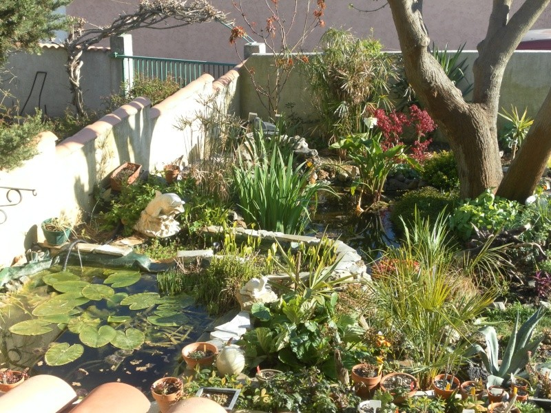 le jardin de syljou - Page 2 Sam_3032