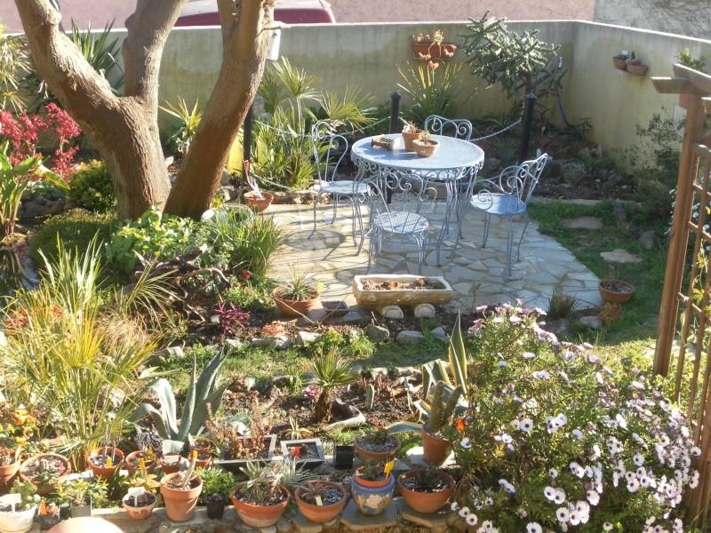 le jardin de syljou - Page 2 Sam_3033