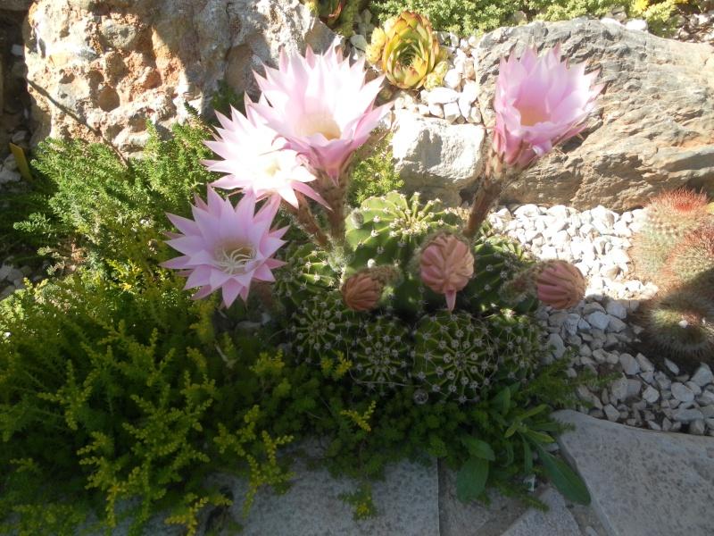 le jardin de syljou - Page 2 Sam_3615