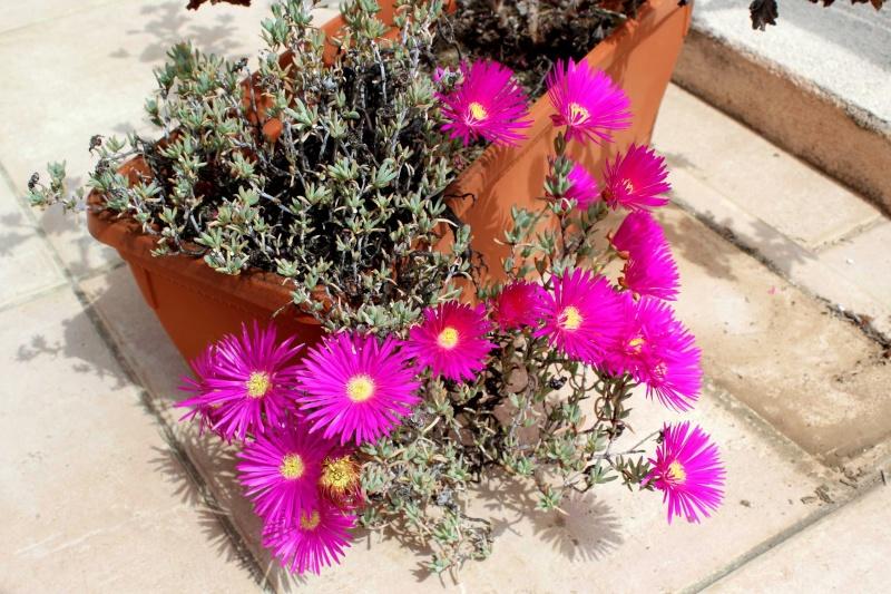 le joli mois de mai des fous jardiniers - Page 5 Delosp14