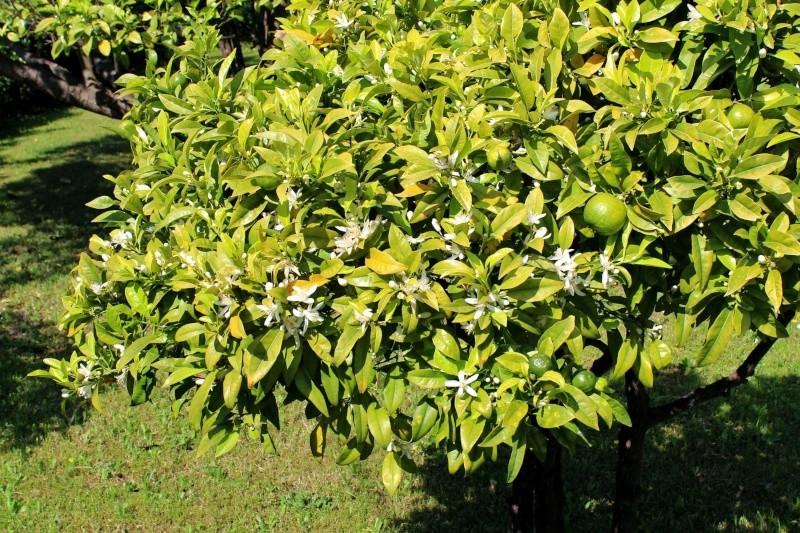 le joli mois de mai des fous jardiniers - Page 2 Orange10