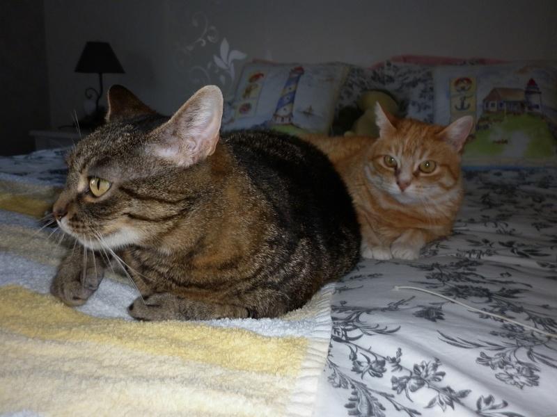 Lili et Jila P1020912