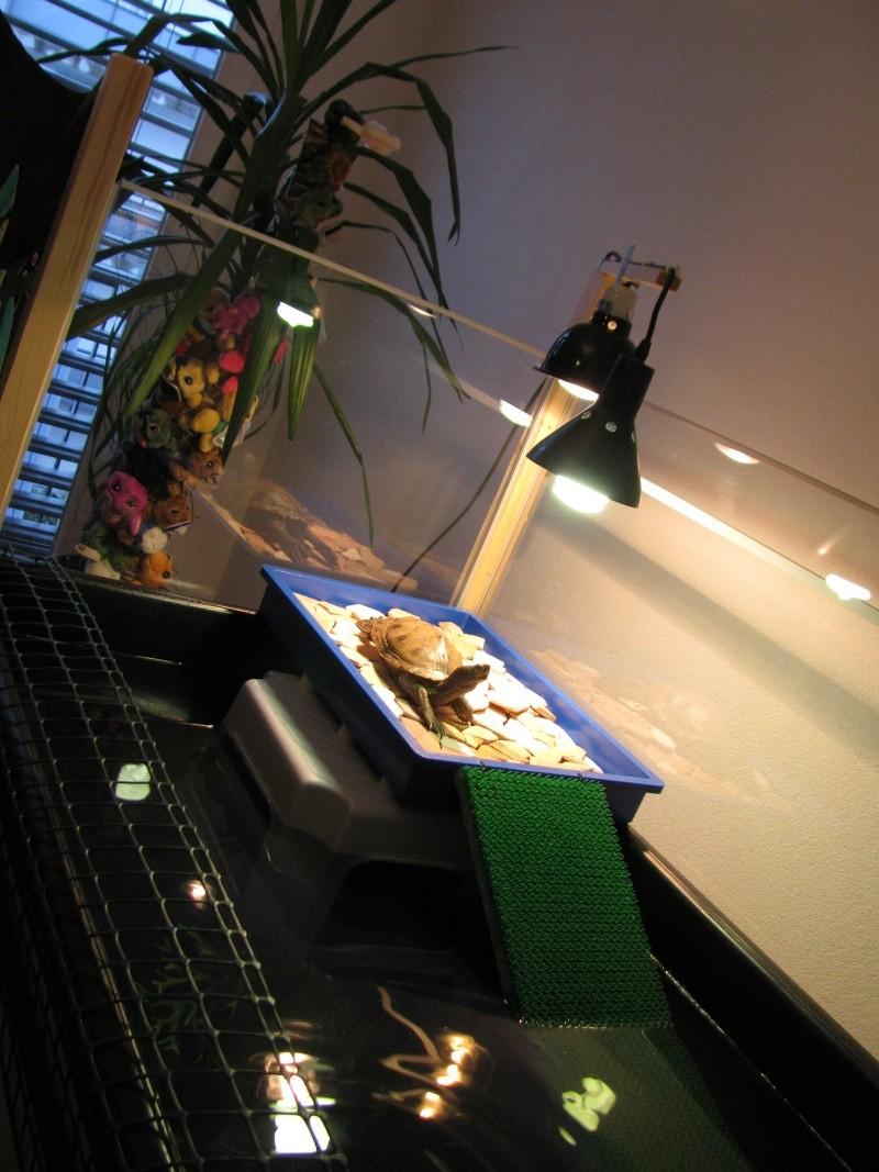 tortue aquatique: comment soigner sa carapace râpée ? 02210