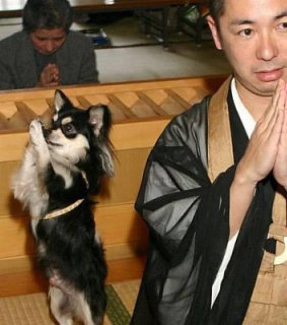 Conan, le chien moine Conan-12