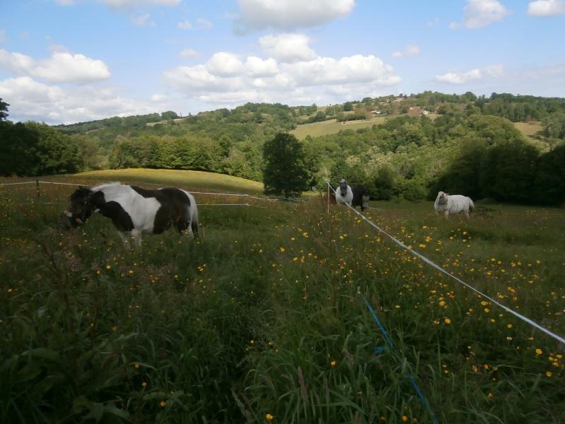 CANNELLE - ONC poney née en 2009 - adoptée en décembre 2013 par Catie - Page 2 P5210210