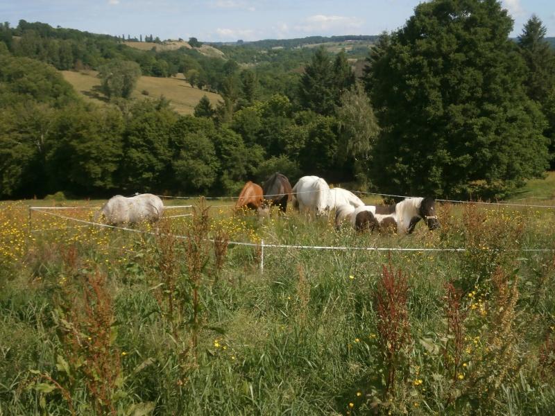 CANNELLE - ONC poney née en 2009 - adoptée en décembre 2013 par Catie - Page 2 P5210211