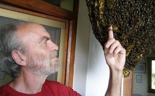 ruche warré, les avis divergent - Page 2 Tumblr10