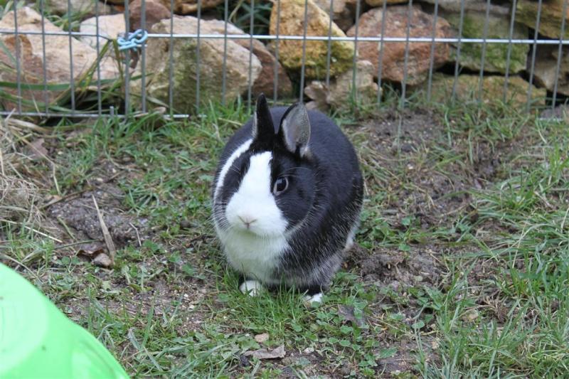 Full Tommy et Little (lapins) refuge FREE 77 31000910