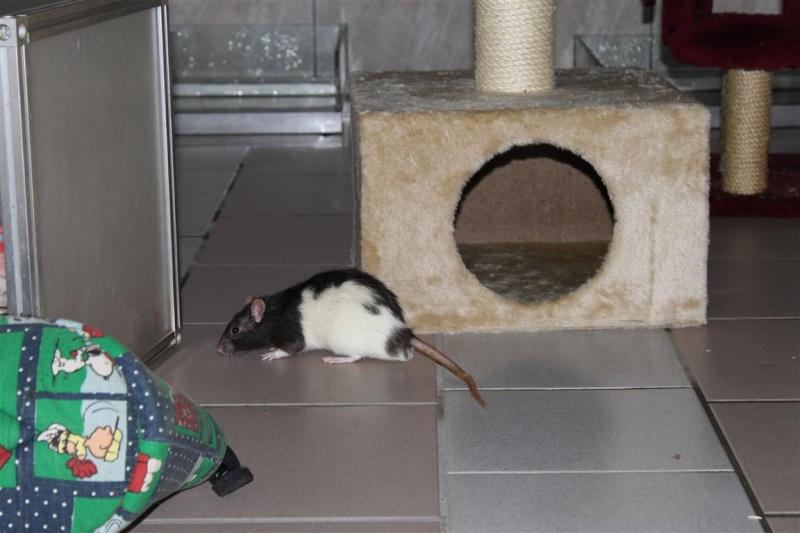 Durex (rat) refuge FREE 70167i10