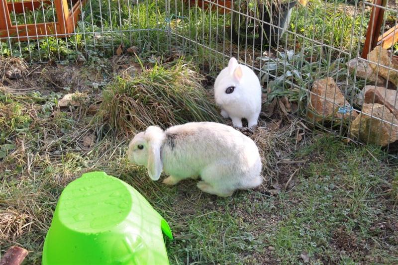 Loula et Jamsin(lapin) refuge FREE 73236410