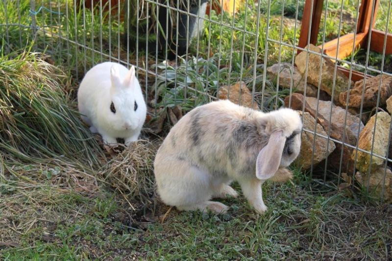 Loula et Jamsin(lapin) refuge FREE 78091810