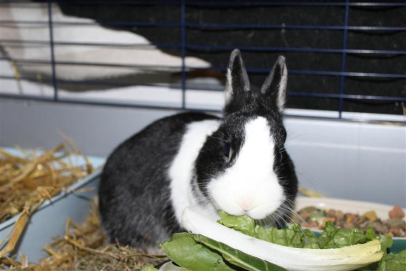 Full Tommy et Little (lapins) refuge FREE 77 81290510