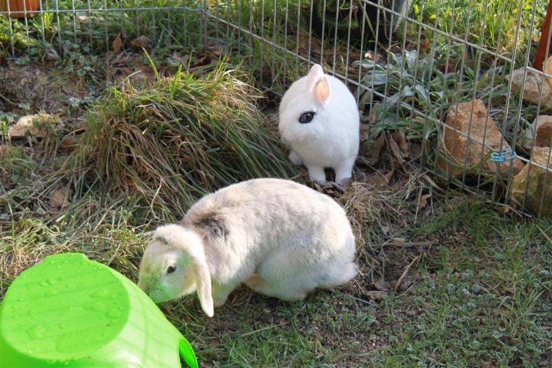 Loula et Jamsin(lapin) refuge FREE 85179710