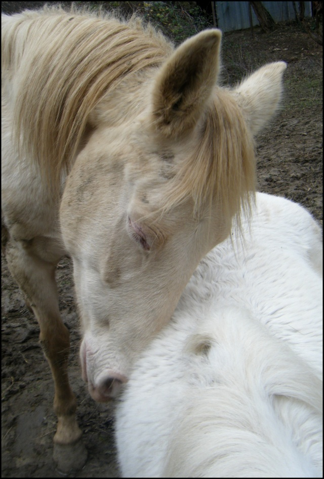 Vos plus belles grimaces de cheval et photos gag .... - Page 6 Sans_t12