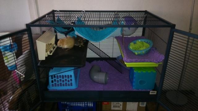 Photos de vos cages - Page 4 Dsc_2010