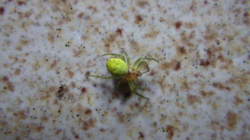 L'araignée à Gilou  Imgp0022
