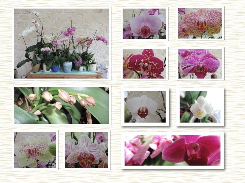 Orchidées Captur10