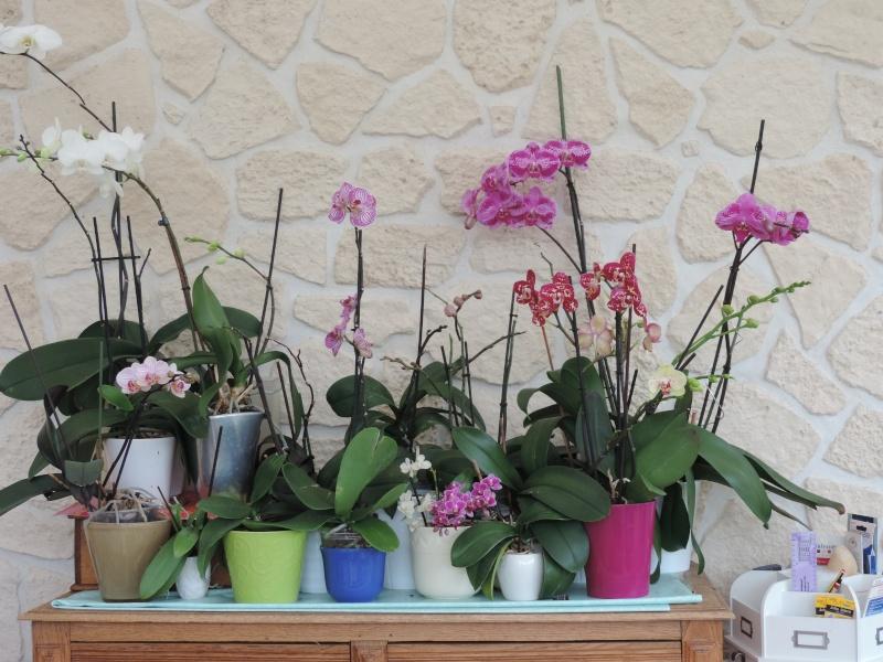 Orchidées Dscn2012