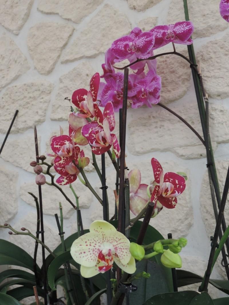 Orchidées Dscn2013