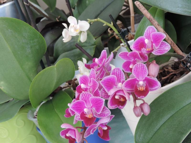 Orchidées Dscn2014