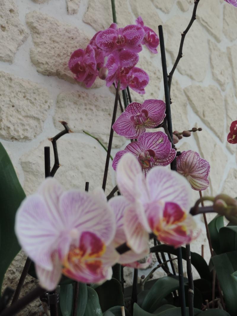 Orchidées Dscn2015