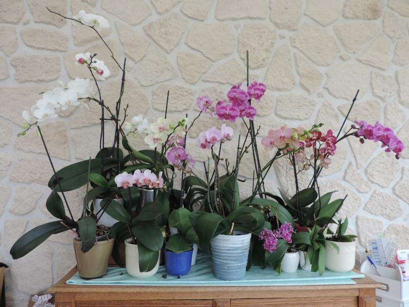 Orchidées Dscn2116