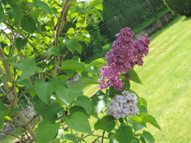 Evolution de nos jardins !!! Dscn2212