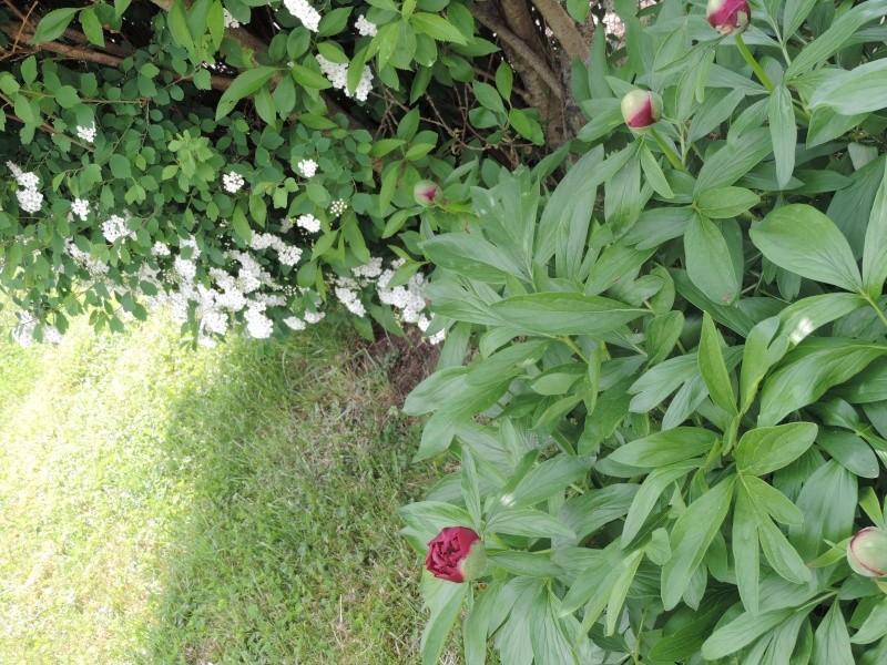 Evolution de nos jardins !!! Dscn2215